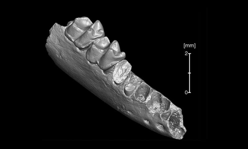 Oldest known ancestor of modern primates may have come from North America not Asia
