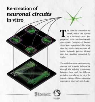 Precision neuroengineering enables reproduction of complex brain like functions in vitro