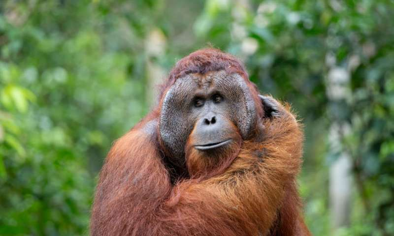 Re inventing the hook Orangutans spontaneously bend straight wires into hooks to fish for food