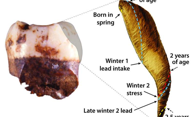 Researchers discover earliest recorded lead exposure in 250000 year old Neanderthal teeth