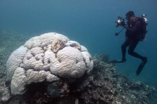 A glimmer of hope for the worlds coral reefs
