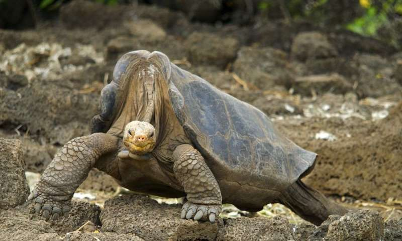 In death Lonesome George reveals why giant tortoises live so long