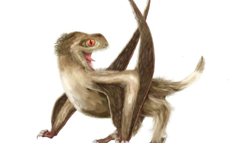 New discovery pushes origin of feathers back by 70 million years