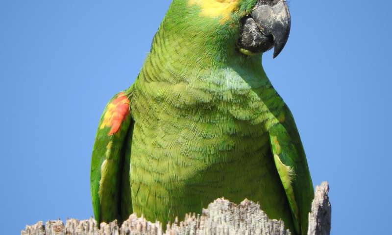 Parrot genome analysis reveals insights into longevity cognition