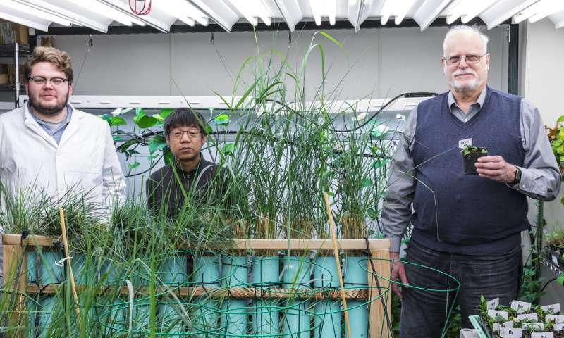 Rabbit gene helps houseplant detoxify indoor air