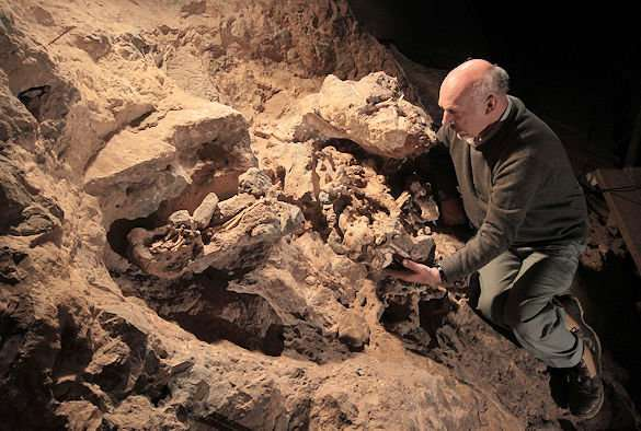 South African skeleton shows humans learned to walk upright in the trees