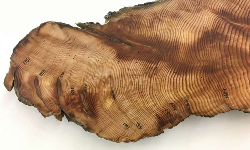 Tree ring analysis explains physiology behind drought intolerance