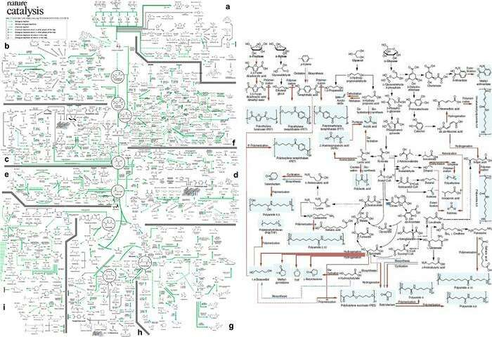 A comprehensive metabolic map for production of bio based chemicals