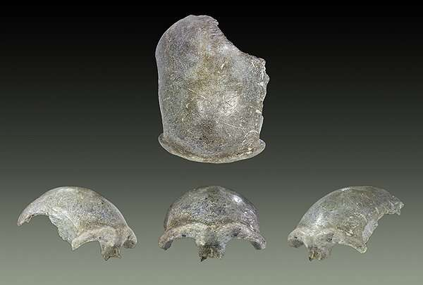 Ancient Mongolian skull is the earliest modern human yet found in the region