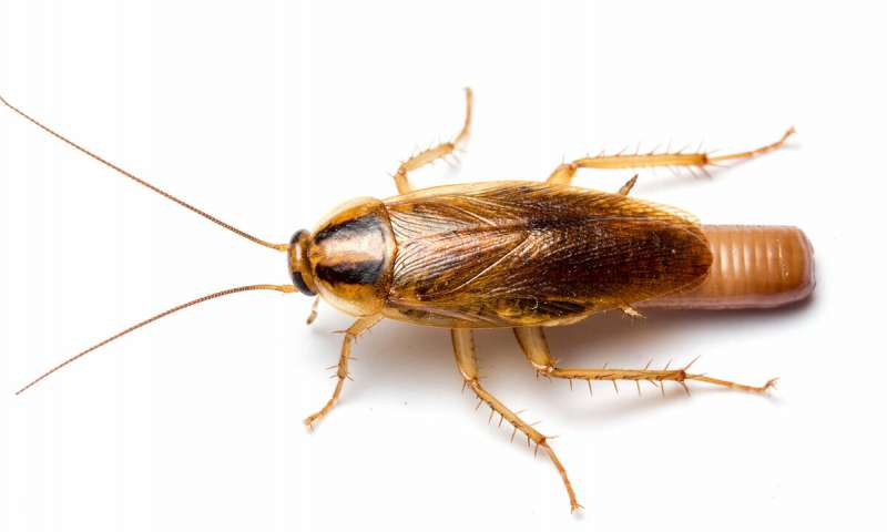 Bug bombs are ineffective killing roaches indoors leave behind toxic residue