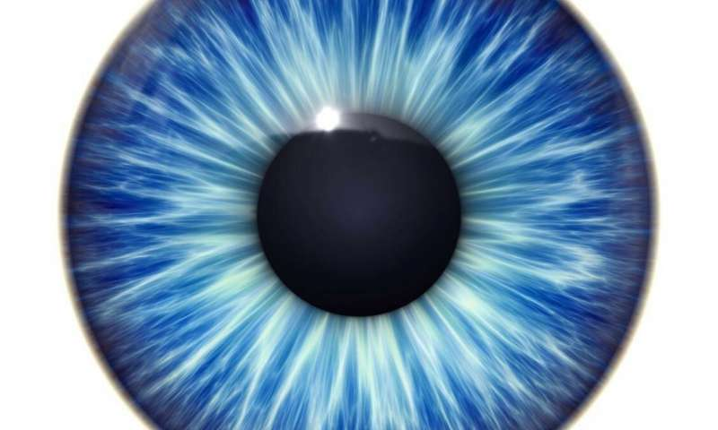 Scientists bring new insight into how animals see