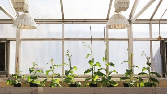 Scientists engineer shortcut for photosynthetic glitch boost crop growth 40