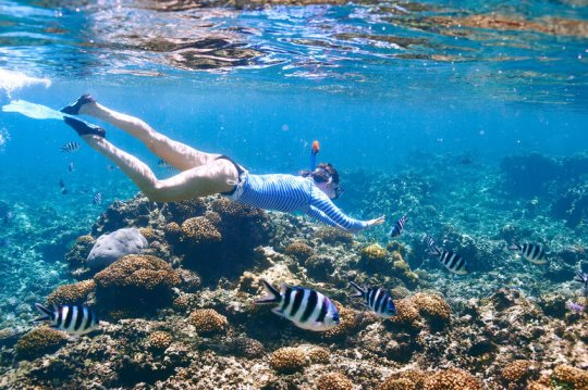 Sunscreen and cosmetics compound may harm coral by altering fatty acids