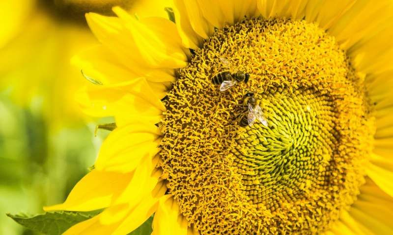 Bees have brains for basic math study finds