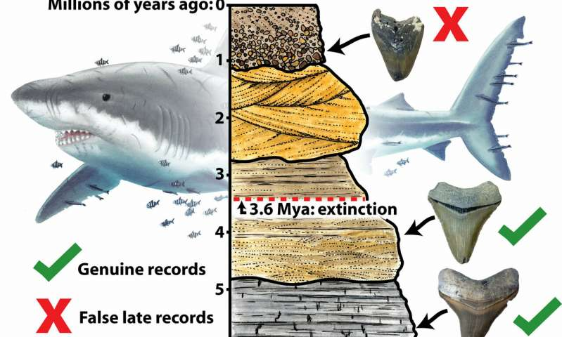Giant megalodon shark extinct earlier than previously thought