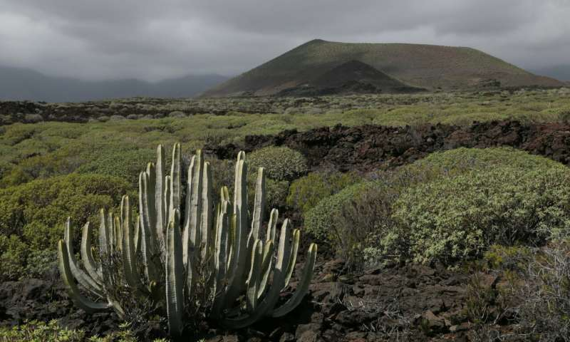How fungi influence global plant colonisation