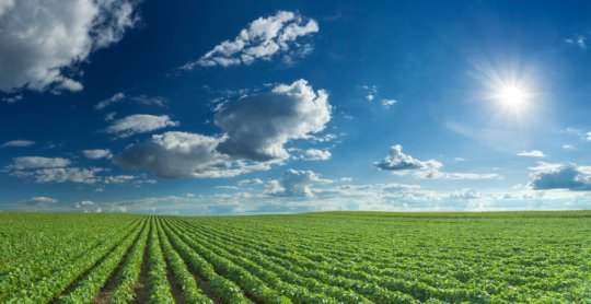 New biochemical pathway that may develop more resilient crop varieties