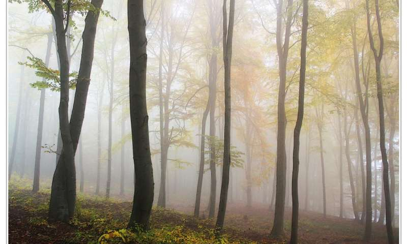 Nitrogen fixing trees eat rocks play pivotal role in forest health