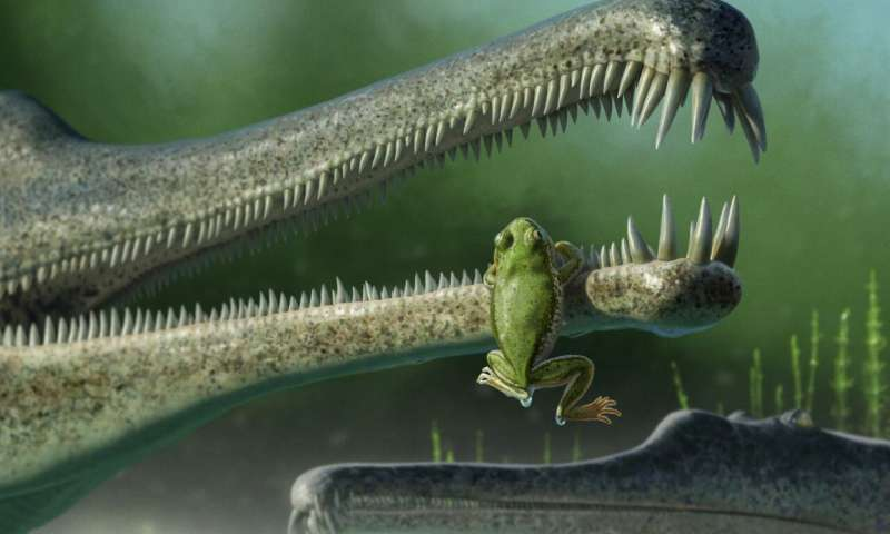 Paleontologists identify small fossils as that of oldest frog relative found in North America