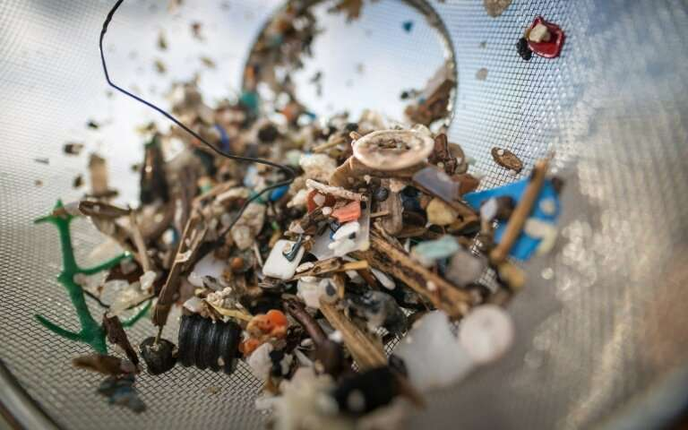 Plastic found in deepest ocean animals