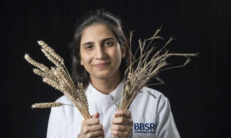 Rapid gene cloning technique will transform crop disease protection