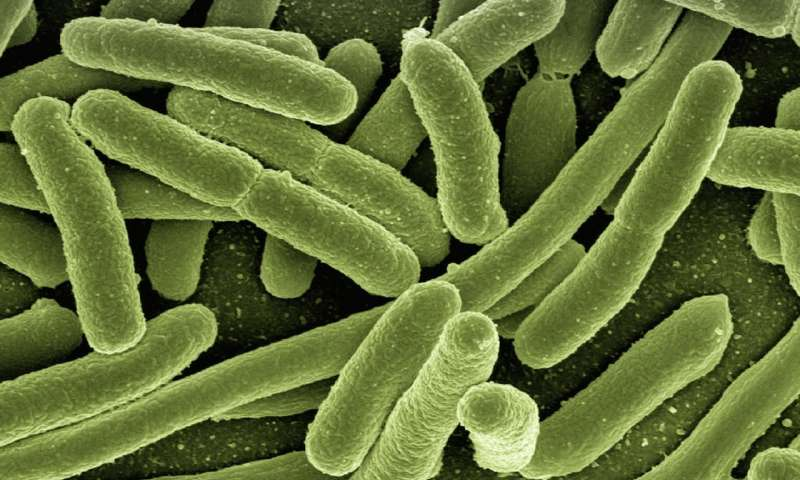 Bacteria could be a future source of electricity