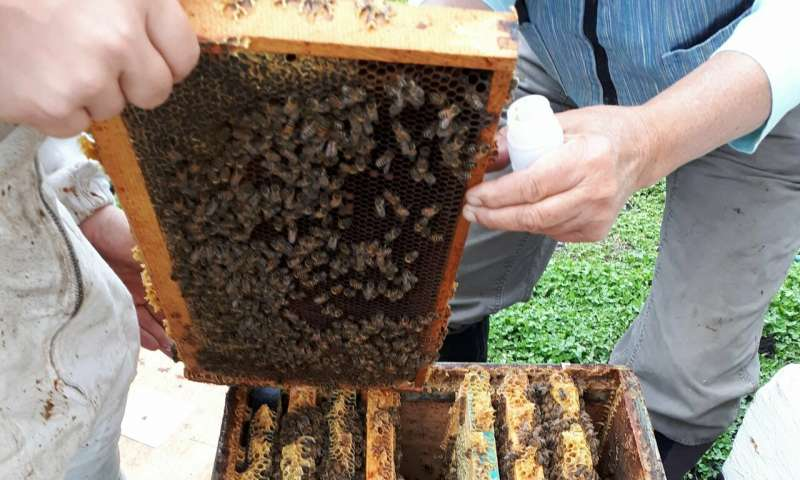 Honey bees can help monitor pollution in cities