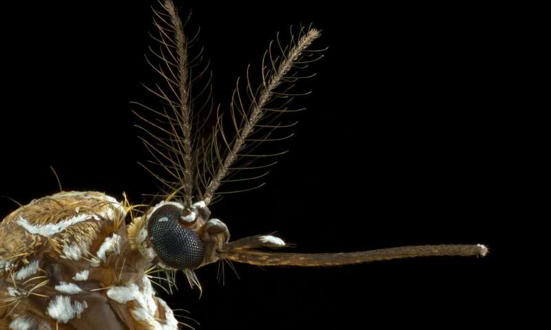 How mosquitoes smell human sweat