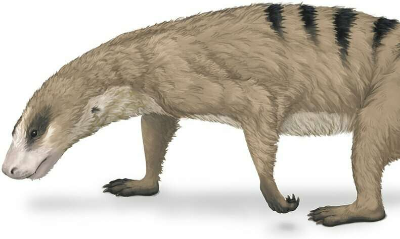 Mammals unique arms started evolving before the dinosaurs existed