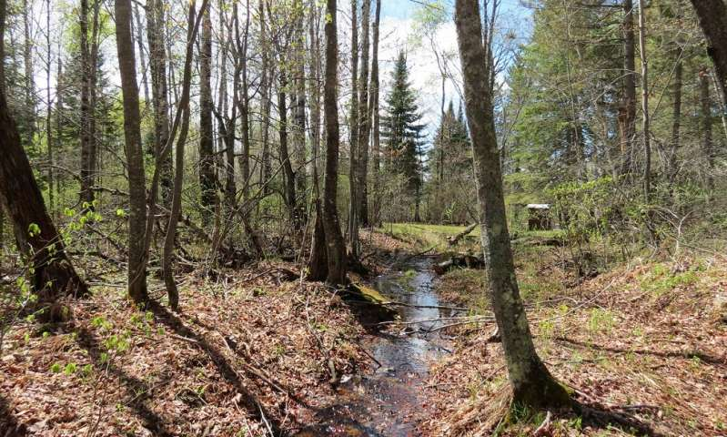 Nitrogen pollutions path to streams weaves through more forests and faster than suspected