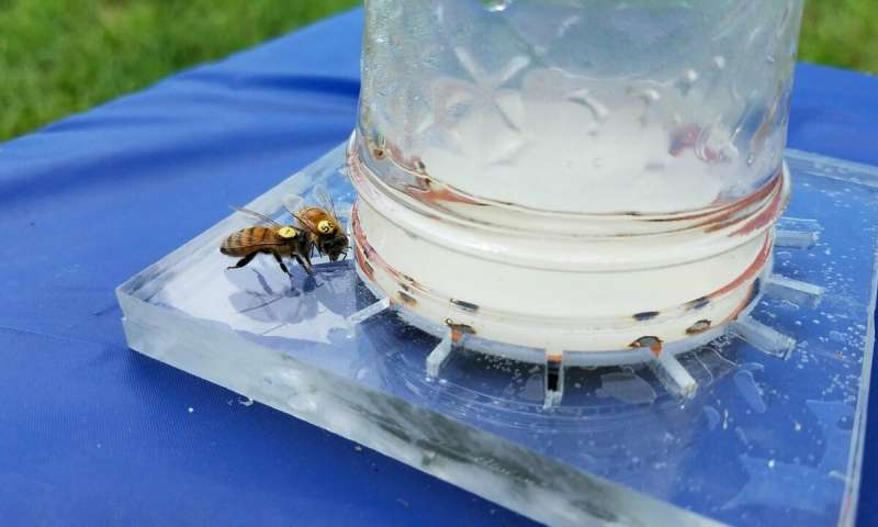 Researchers decipher and codify the universal language of honey bees