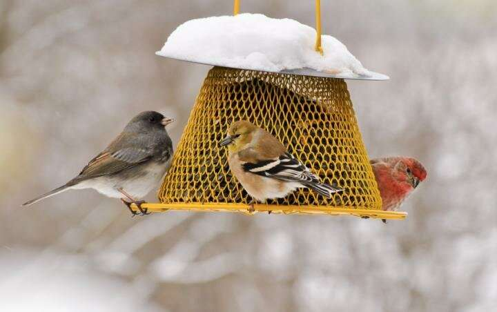 Study finds people who feed birds impact conservation
