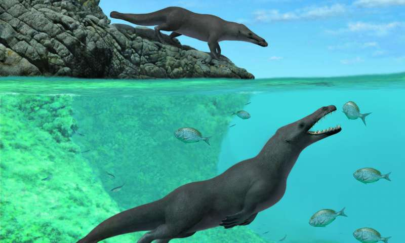 Ancient four legged whale with otter like features found along the coast of Peru