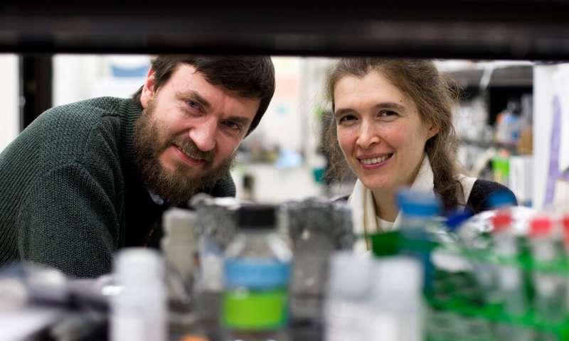 Longevity gene responsible for more efficient DNA repair