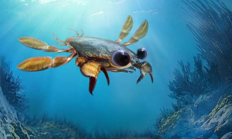 Meet Callichimaera perplexa the platypus of crabs