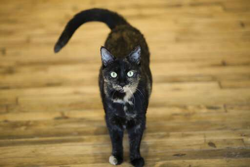 Meow hear this Study says cats react to sound of their name
