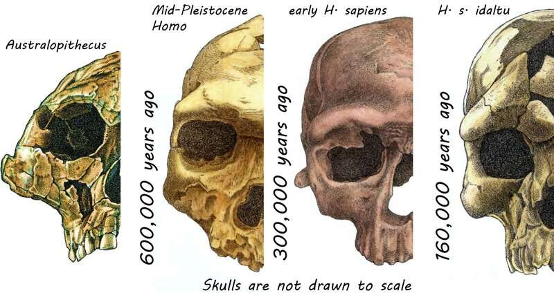 Need for social skills helped shape modern human face
