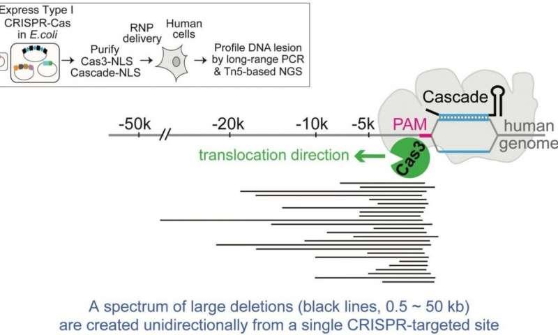 New DNA shredder technique goes beyond CRISPRs scissors