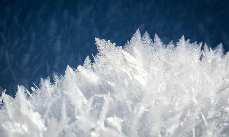 We now know how insects and bacteria control ice 1