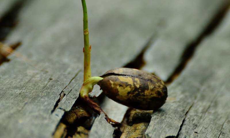 A plant hormone that speeds root growth could be a new agricultural tool