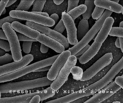 Bacteria change behavior to tackle tiny obstacle course