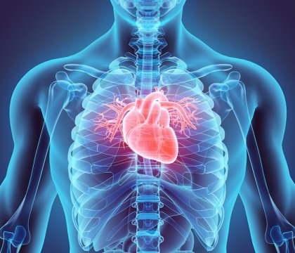 Certain placental stem cells can regenerate heart after heart attack