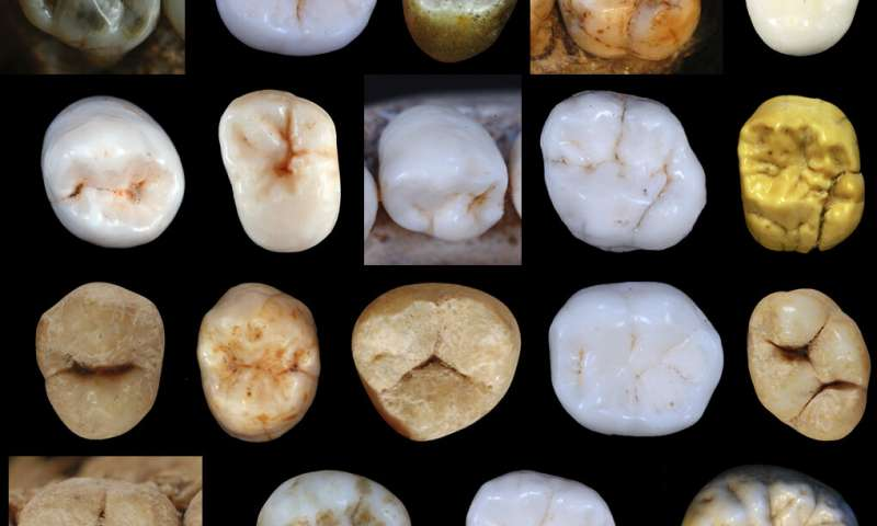 Neanderthals and modern humans diverged at least 800000 years ago