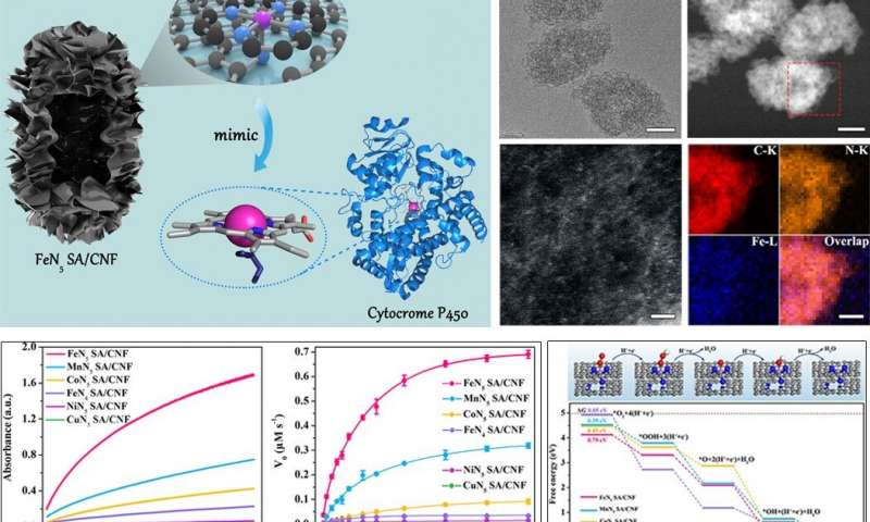 Scientists discover a new class of single atom nanozymes