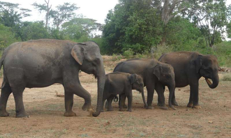 Scientists propose rethinking endangered species definition to save slow breeding giants