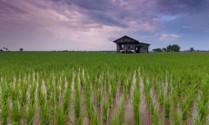 Scientists reveal the relationship between root microbiome and nitrogen use efficiency in rice
