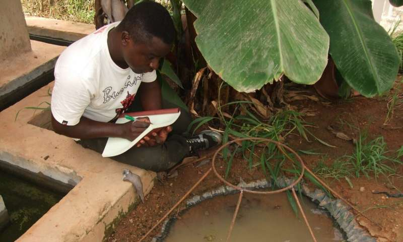 Transgenic fungus rapidly killed malaria mosquitoes in West African study