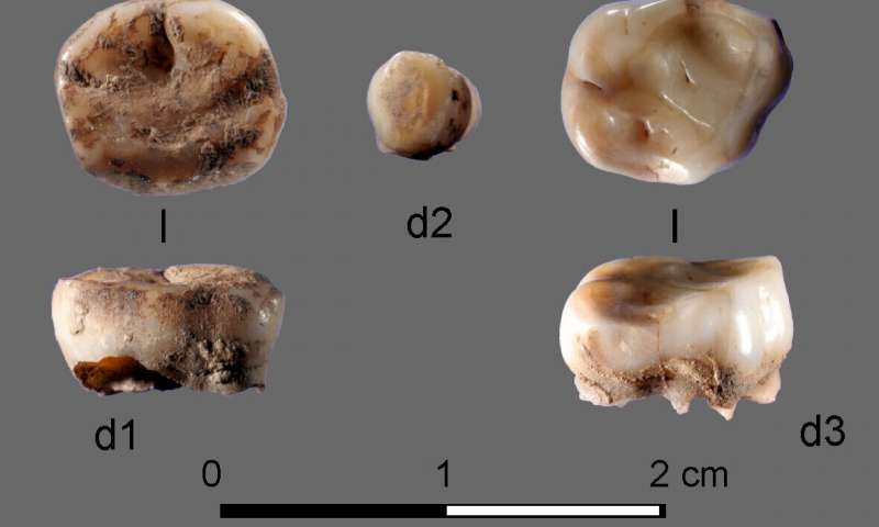 DNA from 31000 year old milk teeth leads to discovery of new group of ancient Siberians