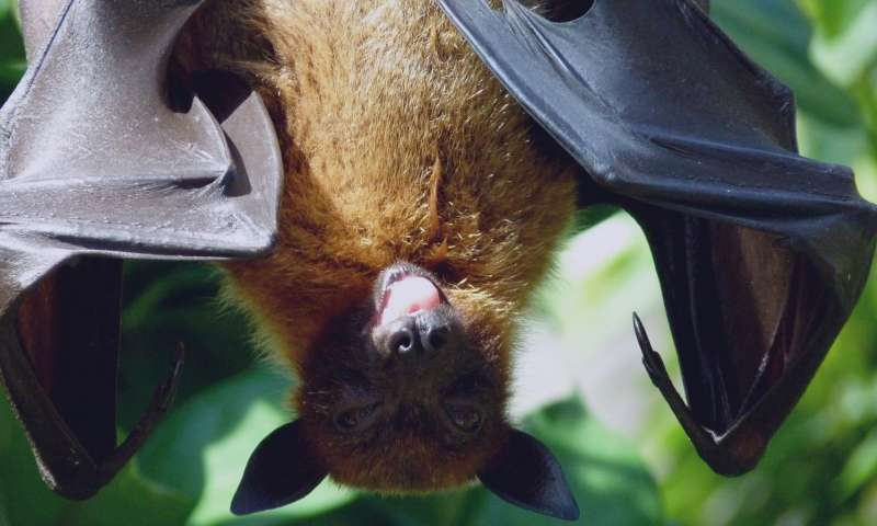 Genetic basis for extended lifespan and cancer resistance discovered in long lived bats