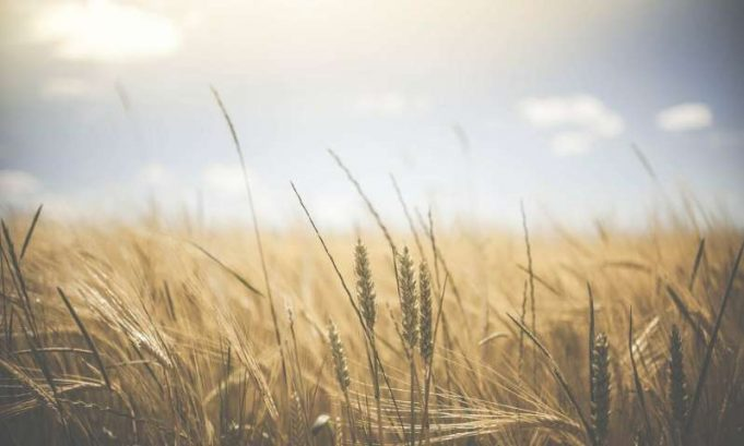 Heat not drought will drive lower crop yields researchers say